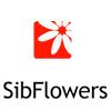 Цветы, сады и парки Сибири