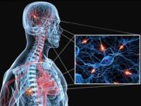 «Рош» представит новые данные, подтверждающие эффективность и безопасность препарата Окревус