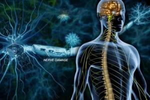 Представленные на конференции AAN новые данные дополнительно подтверждают клиническое преимущество препарата ОКРЕВУС® (окрелизумаб) при рецидивирующем и первично прогрессирующем рассеянном склерозе