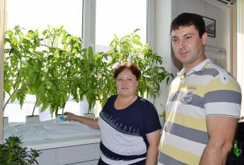 Уральцы растят огурцы на асбесте