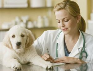 Компания «Берингер Ингельхайм» намерена вдвое увеличить продажи ветеринарного подразделения в 2017 году