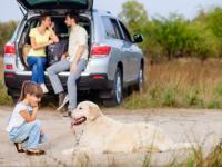 Как подготовить домашнее животное к ежегодной вакцинации?