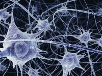 Новые данные демонстрируют снижение вероятности прогрессирования тяжелых форм рассеянного склероза при терапии препаратом ОКРЕВУС