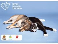 В Москве август объявлен месяцем помощи животным