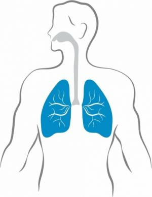 Результаты шестимесячного исследования по применению комбинации препаратов Эсбриет и нинтеданиб у пациентов с ИЛФ представлены на конгрессе ERS