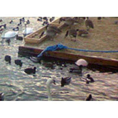 Кормление птиц - популярное туристическое развлечение в Стокгольме