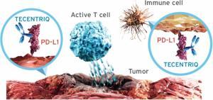 Препарат Тецентрик (атезолизумаб) компании «Рош» получил одобрение в ЕС для применения при определенном типе метастатического рака легкого и двух типах метастатического рака мочевого пузыря