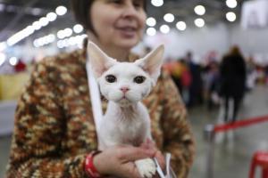 Юбилейная выставка кошек «ГРАН-ПРИ ROYAL CANIN» подводит итоги