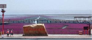Красный пляж – самый красивый ландшафтный коридор Китая