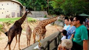 Открытый контактный зоопарк Кхао Кхео в Королевстве Таиланд приглашает на ночное сафари с экзотическими животными