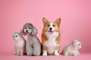 От натуральности до «умных» гаджетов: тренды в индустрии товаров для животных