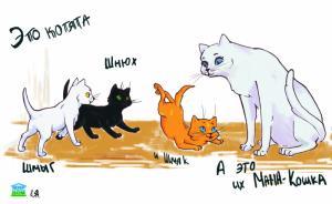 Котята спасают детей от тяжелых ожогов!