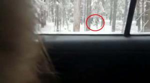 Снежный человек стал виновником ДТП на подмосковной трассе и за его поимку объявлена награда в 300 000 рублей!