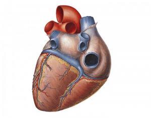 Новейшая Израильская разработка – катетеризация сердца с помощью робота-хирурга