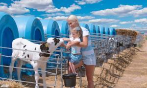 Сказка о том, как подружились ребенок и теленок в волшебном крае чудесных коров