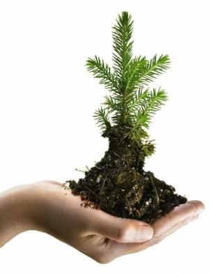 Низкоуглеродная экономика и устойчивое развитие: куда мы движемся?