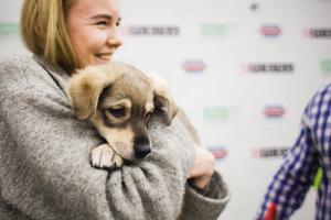 Любителей собак ждут в Есенин-центре на акции «Хочешь, пес, я тебя поцелую…»