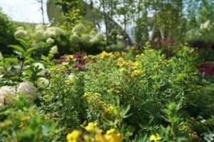 Фестиваль «Цвет лета» привел природу в город