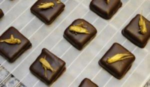 В Москве пройдет мастер-класс по приготовлению шоколада с жареными сверчками