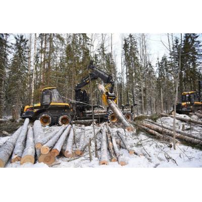 «Свеза» инвестирует в лесозаготовку и лесовосстановление
