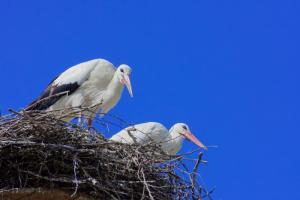 «Дом Белого Аиста»: выбирайте шифер, он безопасен для птиц