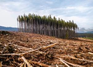 726 га леса Одинцовского городского округа Московской области, в том числе Липкинский лес оказались под угрозой застройки