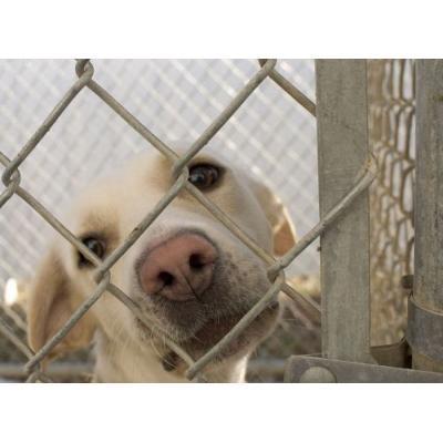 Ввести меры государственной поддержки для тех, кто берёт животных из приютов, предлагают «Зелёные»