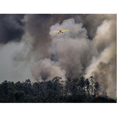 За запрет охоты на животных и птиц в сгоревших лесах Якутии выступают «Зелёные»