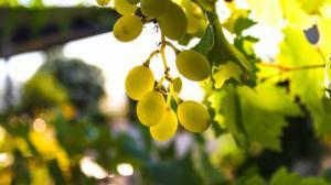 Валенсия: винный туризм