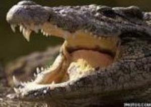 Дом мод Hermes начнет разводить крокодилов