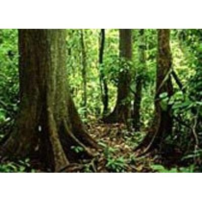 В центре Лондона вырастет тропический лес