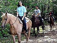 Отель в Турции предлагает конный отдых