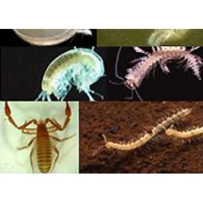 Биологи обнаружили под землёй 850 новых видов беспозвоночных