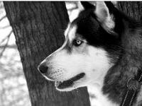 Гонки на собаках в Орлицких горах