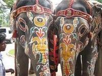 Возбужденный слон испортил свадьбу