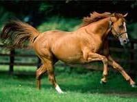 80 км в подарок любителям конного спорта
