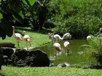 Ботанический сад в Деэ: красота и разрушительная мощь природы