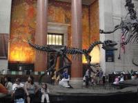 Выставка крупнейших динозавров в мире