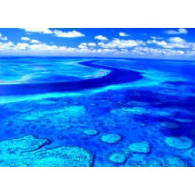 Австалийцы откроют в Коралловом море крупный заповедник