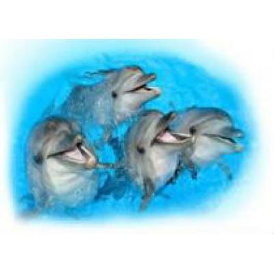 Этим летом в Феодосии откроется новый дельфинарий