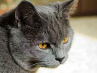 В США организован первый фестиваль клипов о кошках