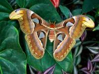 В Турции откроют парк «Долина бабочек»