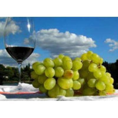В Армении пройдет фестиваль вина
