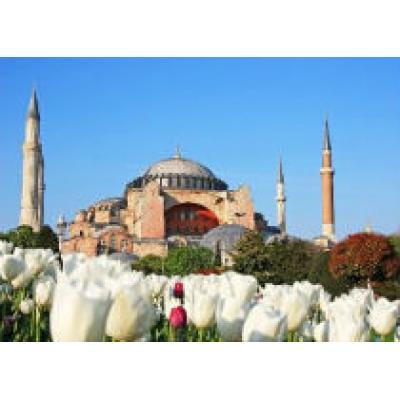 В Стамбуле откроют центр цветов