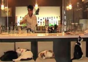 Во французском баре наливают только кошкам