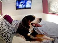 В Вене открыли отель для собак