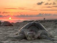 Мексика предлагает понаблюдать за черепахами