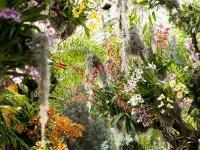 Нью-Йорк приглашает в «Тропический рай»