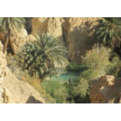 Удивительный Тунис