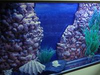 Изысканный интерьер аквариума